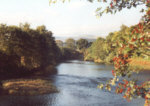 River Earn, Templemill - Salmon, Sea trout, Brown trout, Grayling fishing