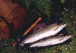 A Brace of Sea Trout from the River Earn taken on a Needle fly.