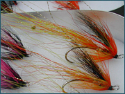 Ally's Shrimps and Gold Cascade