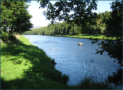 News - Salmon Fishing in Scotland
