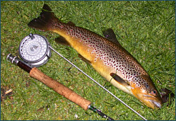News on Scottish Trout Fishing