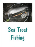 Sea Trout Fishing